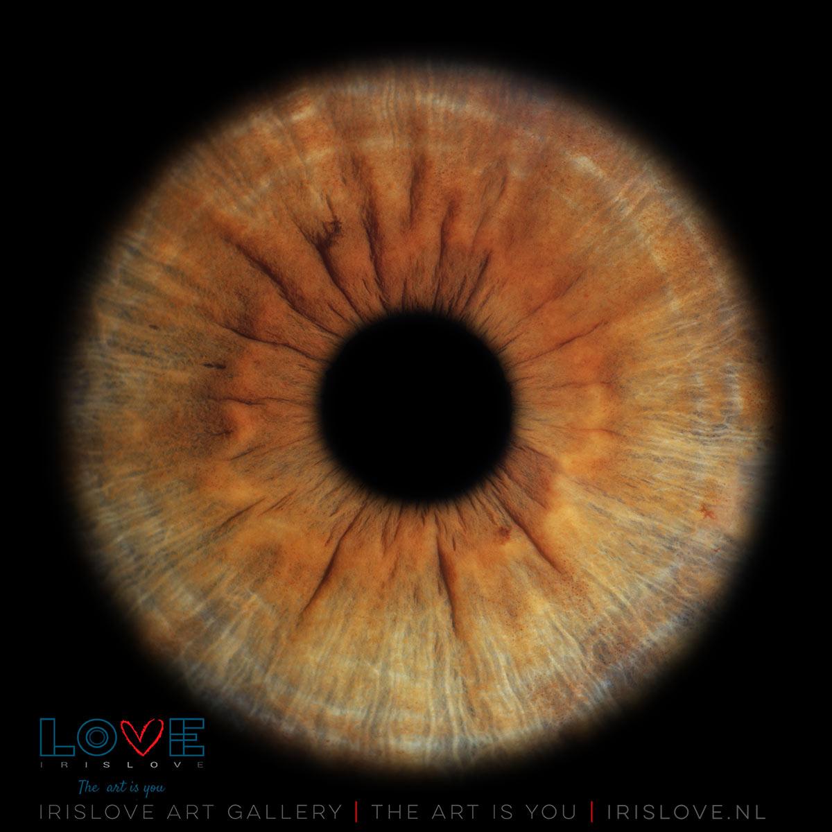 bruine ogen mooi uit laten komen