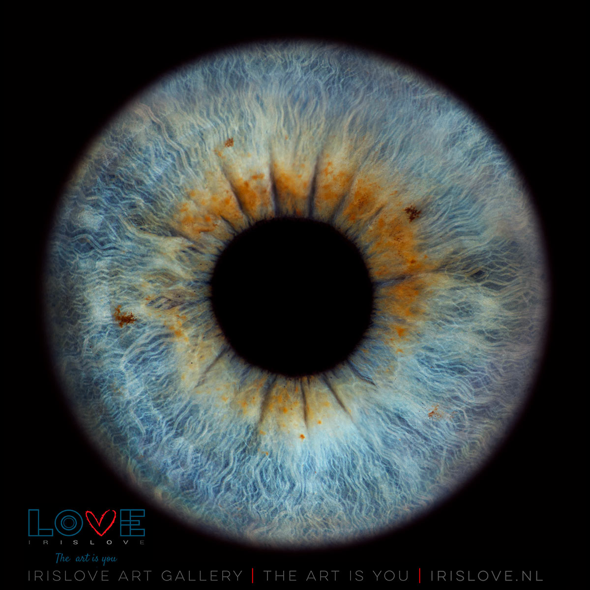 blauwe iris oog